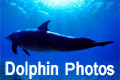 Dolphin Photos