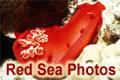 Red Sea Photos