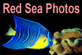 Red Sea Gallery