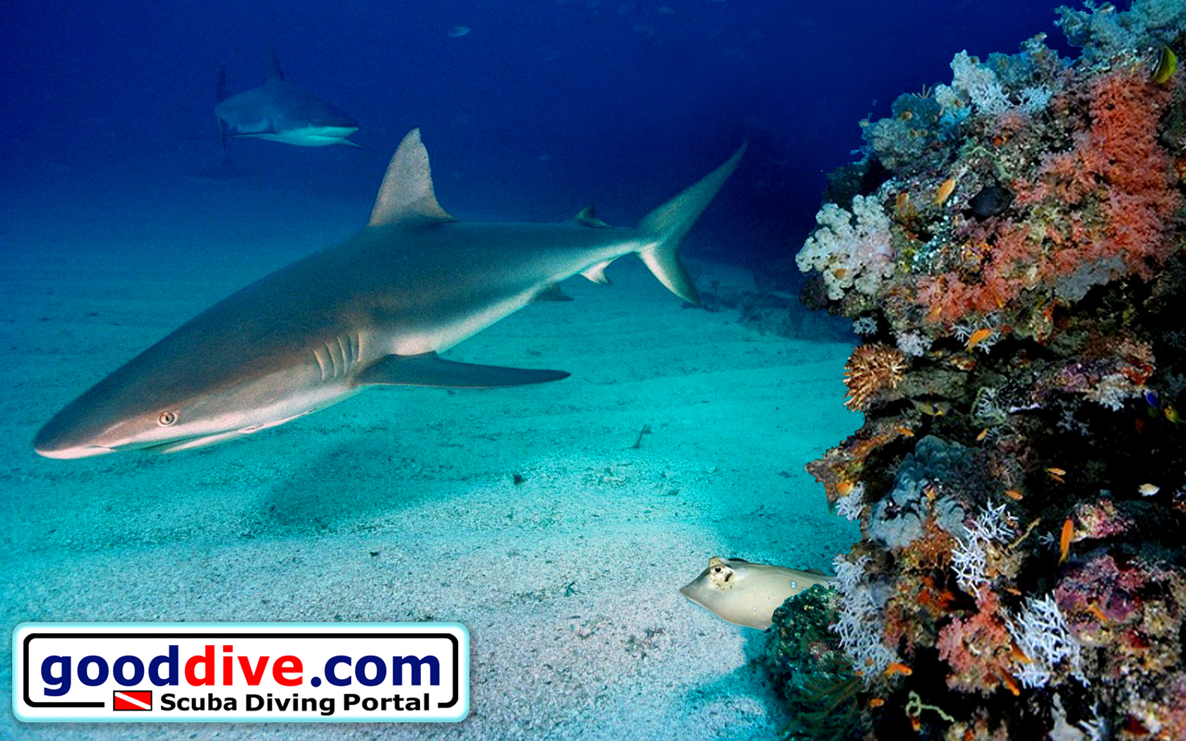Wallpaper Reef Sharks 1680 x 1050
